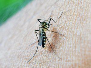 Insektenstich durch Mücke