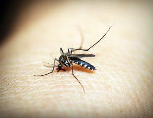 Hilfe bei Insektenstichen – Schwellungen und Juckreiz lindern